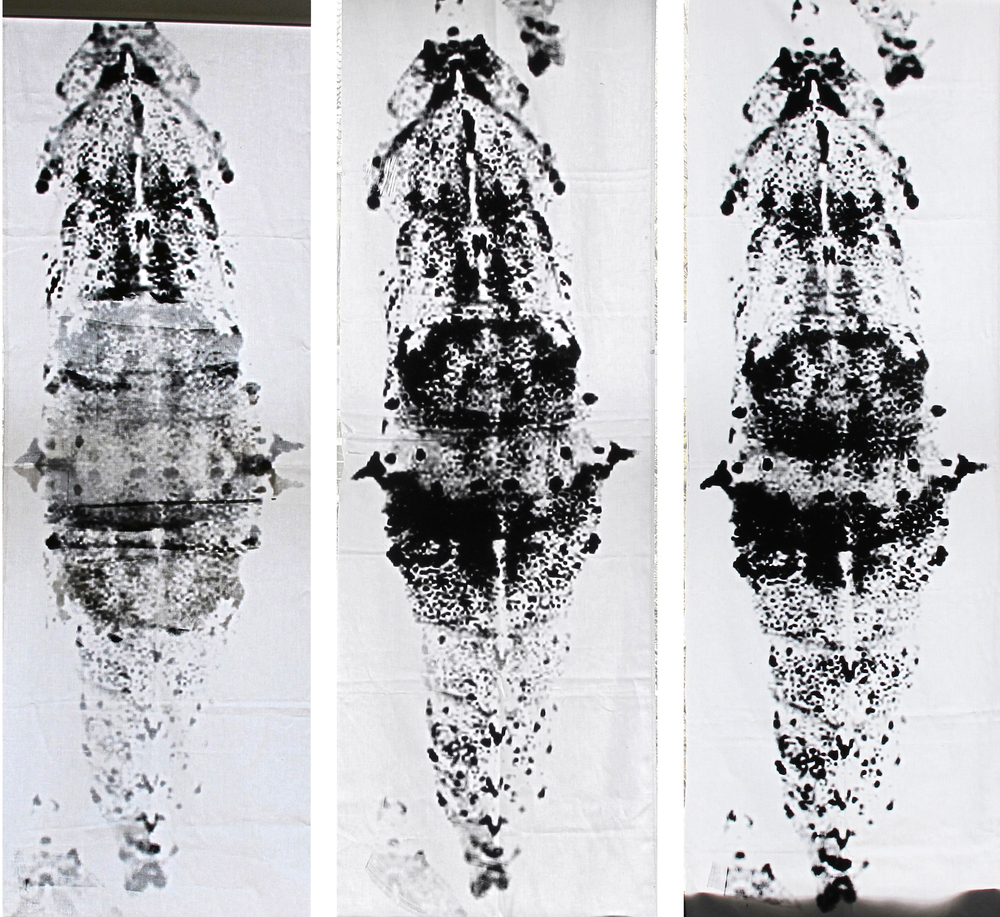 Material: Baumwolle Motiv: Schmetterlingskokon Fundort: Internet  Format: 80x160cm