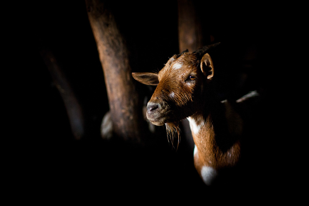 www.jasonseagle.com