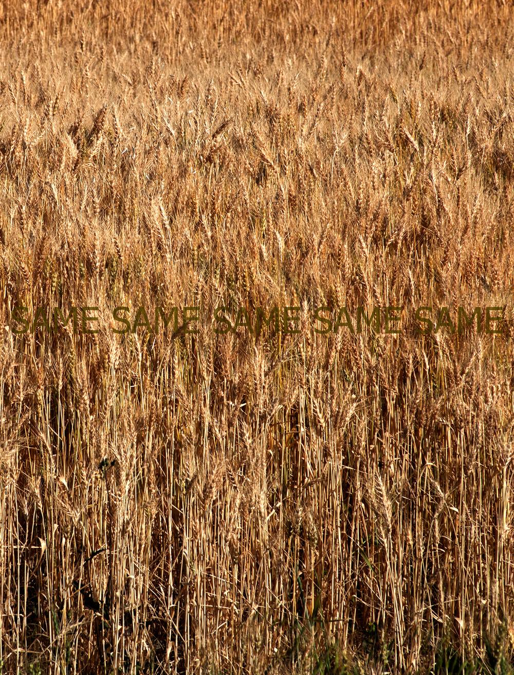 Grain Same