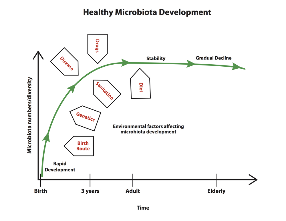Development of the gut microbiome.