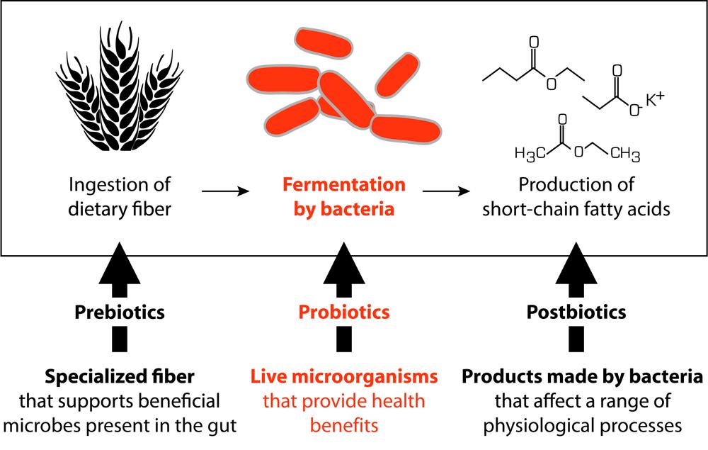 Probioticshome Thinkbiome