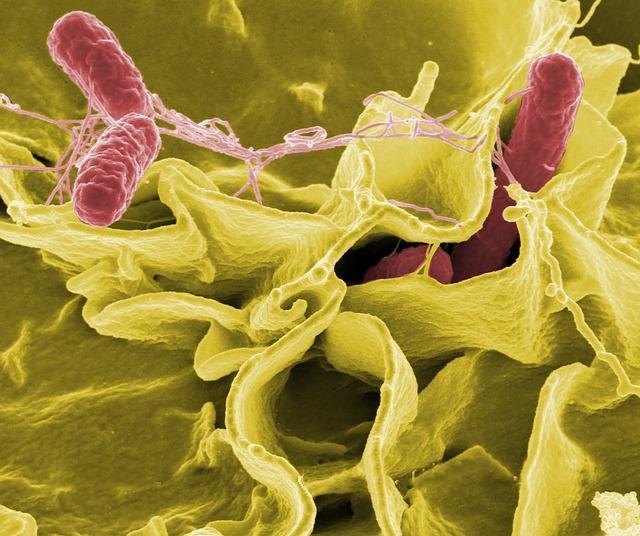 Probiotics   ThinkBiome