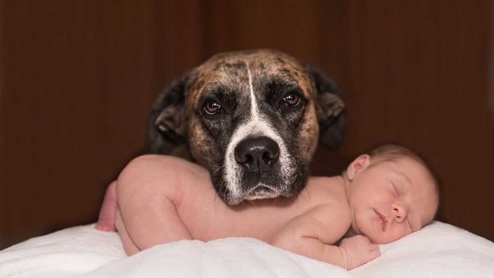 Dogs are good for baby microbiomes