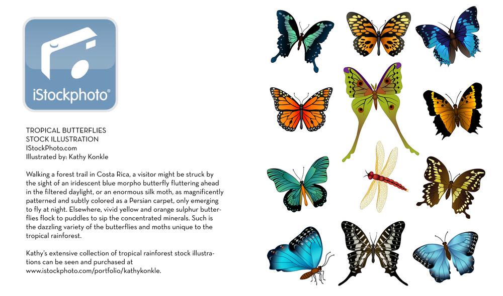tropical-butterflies.jpg
