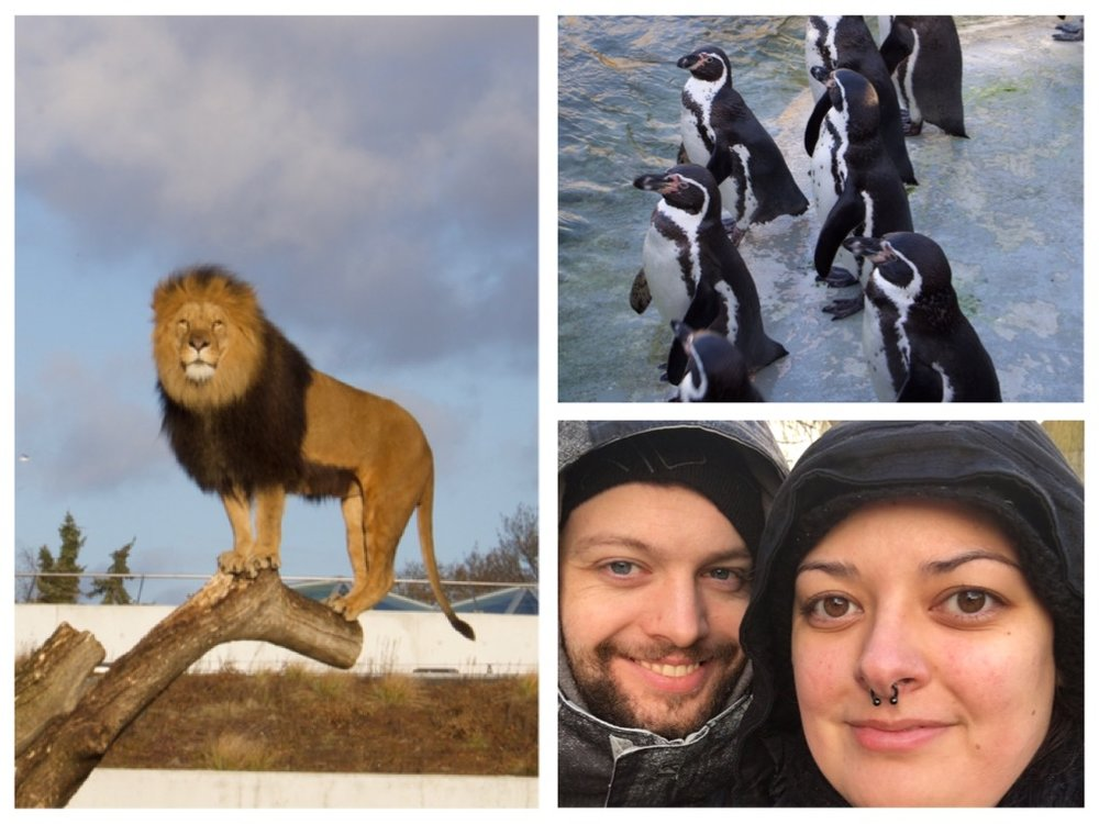 The lion, penguins and Daniel and I in the cold.