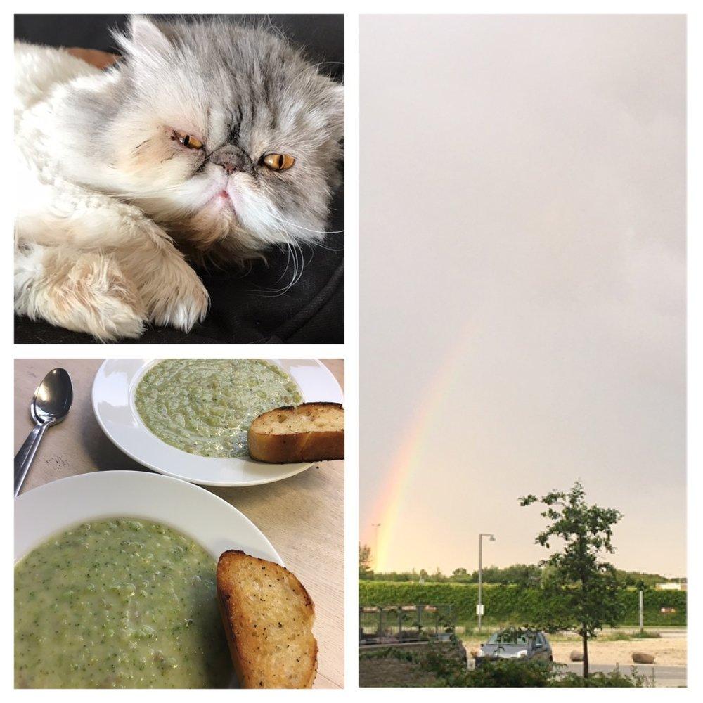 Indira, Vegan soup & Rainbow