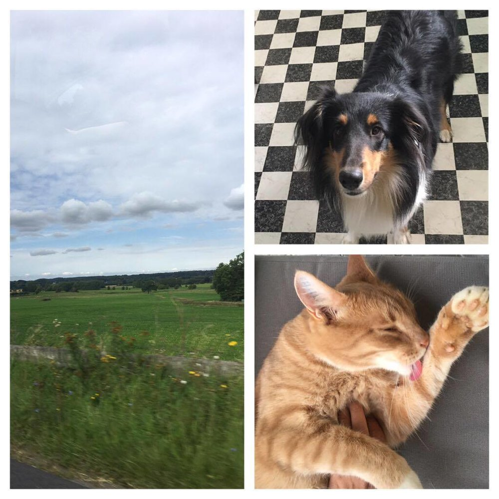 Countryside & pets