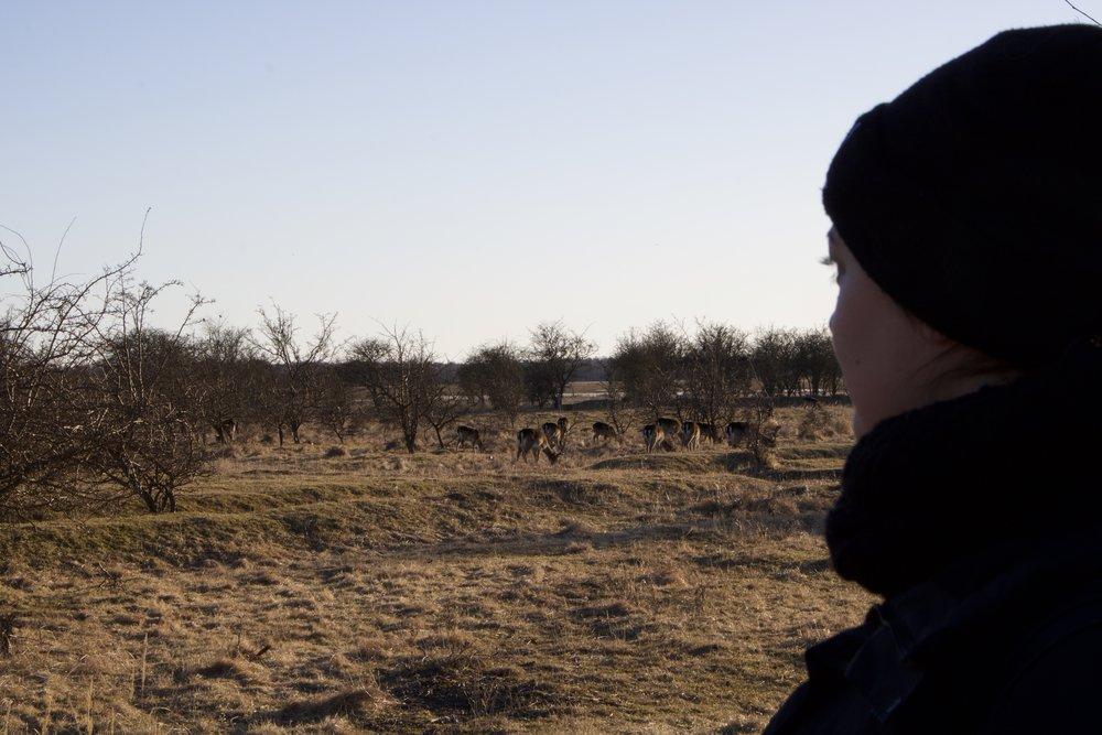 Deer & I