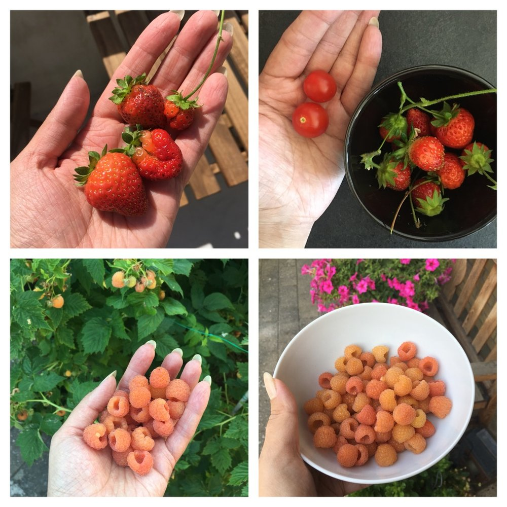 Strawberries & tomatoes from my penthouse garden. Raspberries from Daniel's mom's garden.