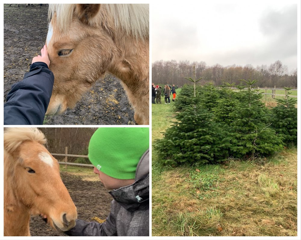Looking for the perfect Christmas tree