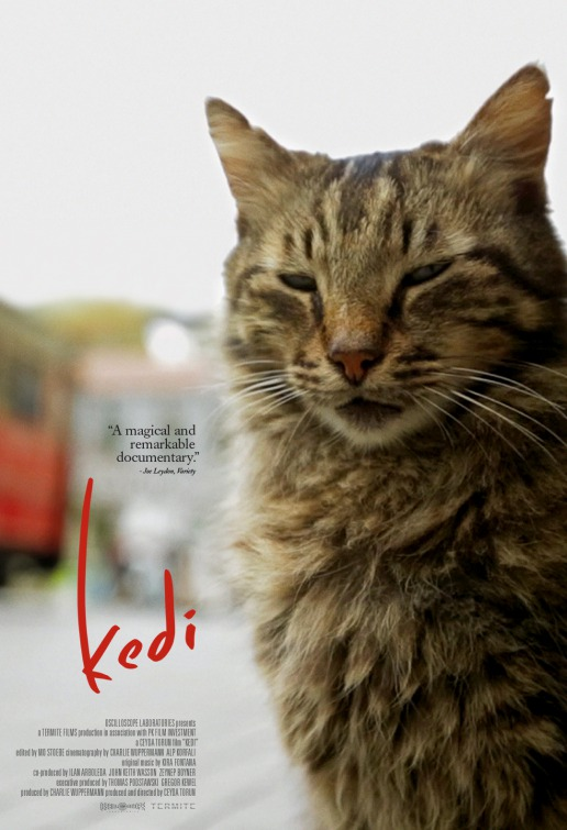 kedi shows five times a day this week at the nick