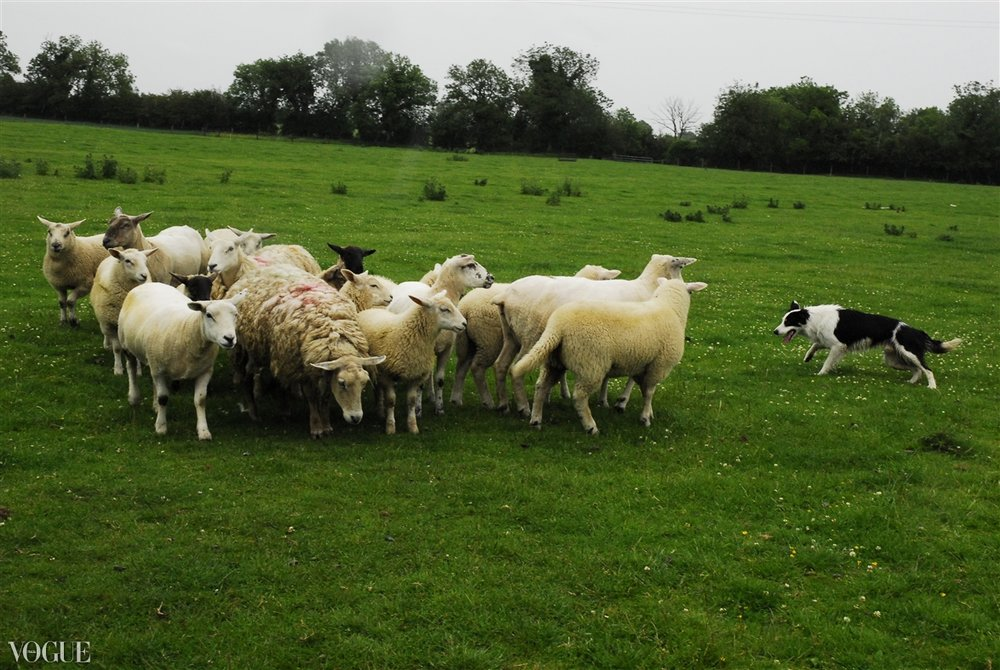 """Sheep Herder"" ranch outside Liverpool, UK 2011"