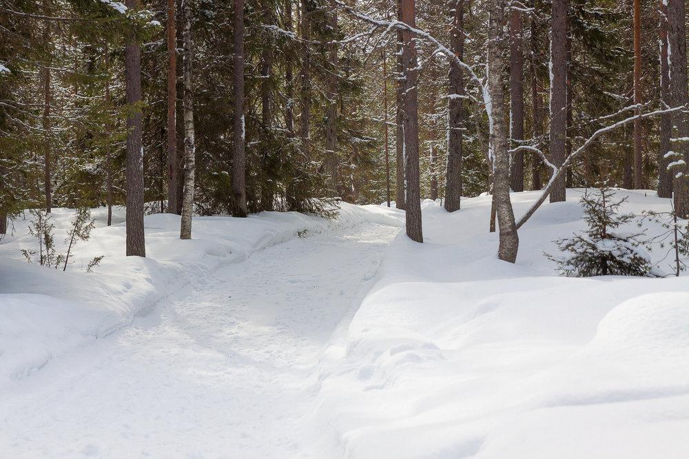 Mökkitie. Lunta on huomattavasti reilummin kuin Oulun korkeudella.