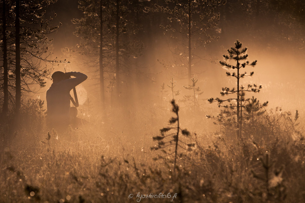 Kultainen auringonnousu Posiolla elokuisena aamuna klo: 5.52.