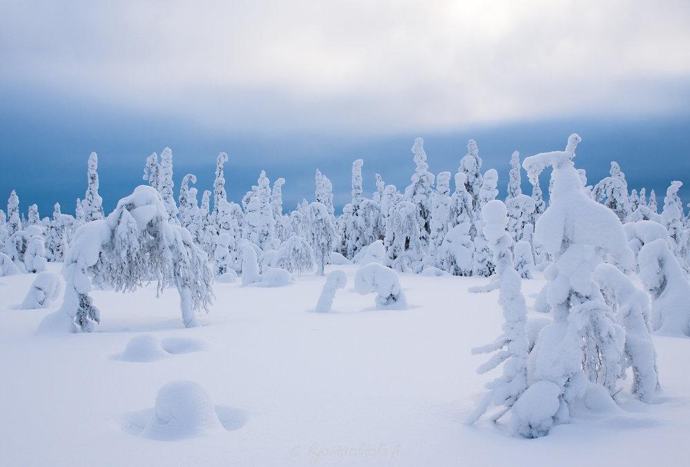 Tuhkanharmaa talvipäivä ja yhtäkkiä noin viiden minuutin ajan oli tällaiset valot. Sitten oli taas harmaata. Ikinä ei tiedä!