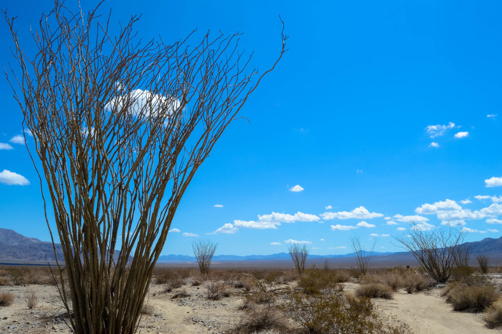 Ocotillo Patches