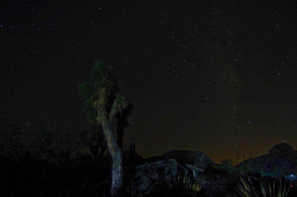 joshua-tree-at-night