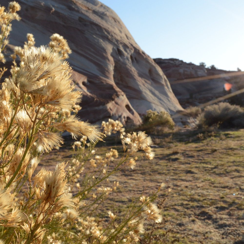 White House campground  between Page, Ariz. and Kanab, Utah.