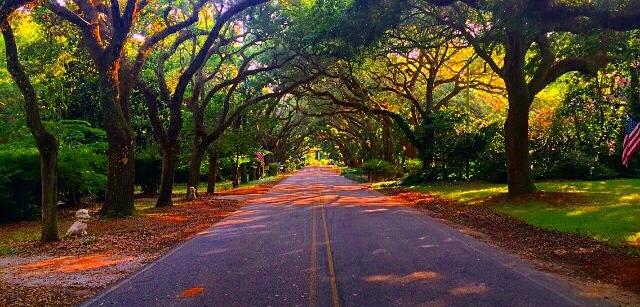 Magnolia Roads