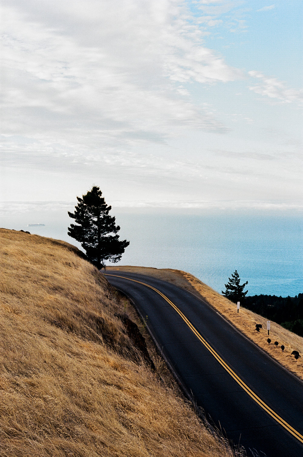 mount_tamalpais_road_shot