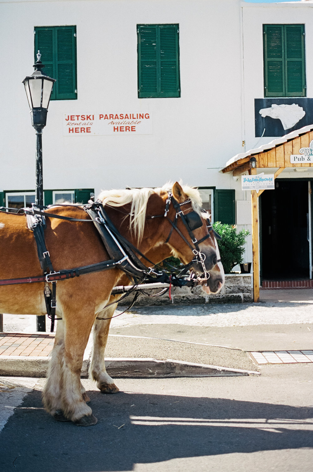 horse carriages bermuda