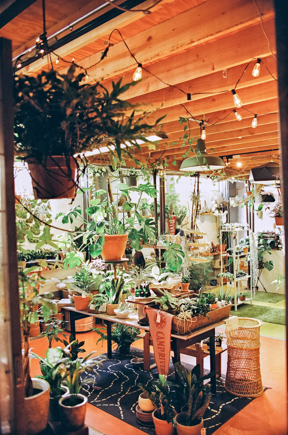 the bosque plant shop arizona