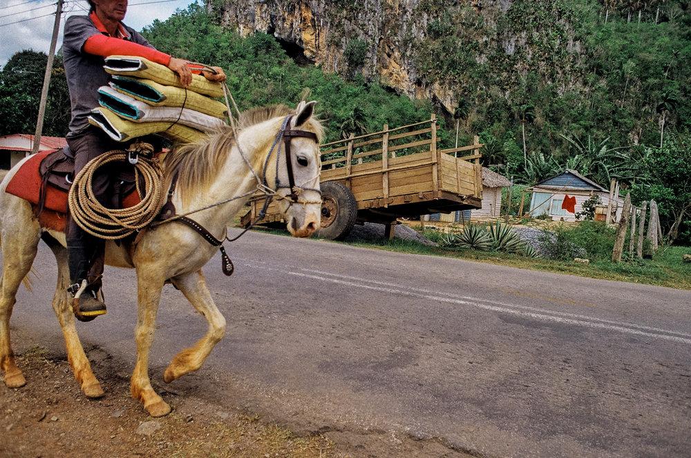 vinales horse