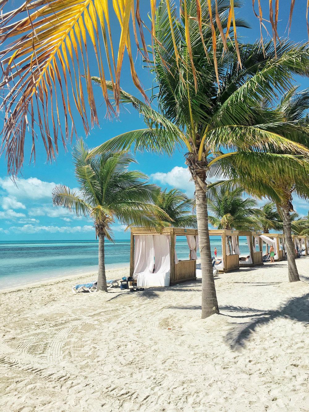 cococay bahamas palm trees
