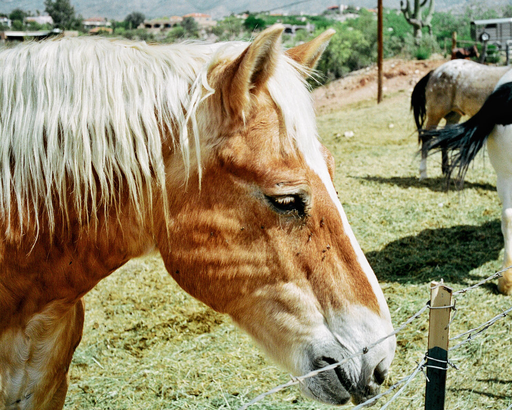 horses in tucson arizona