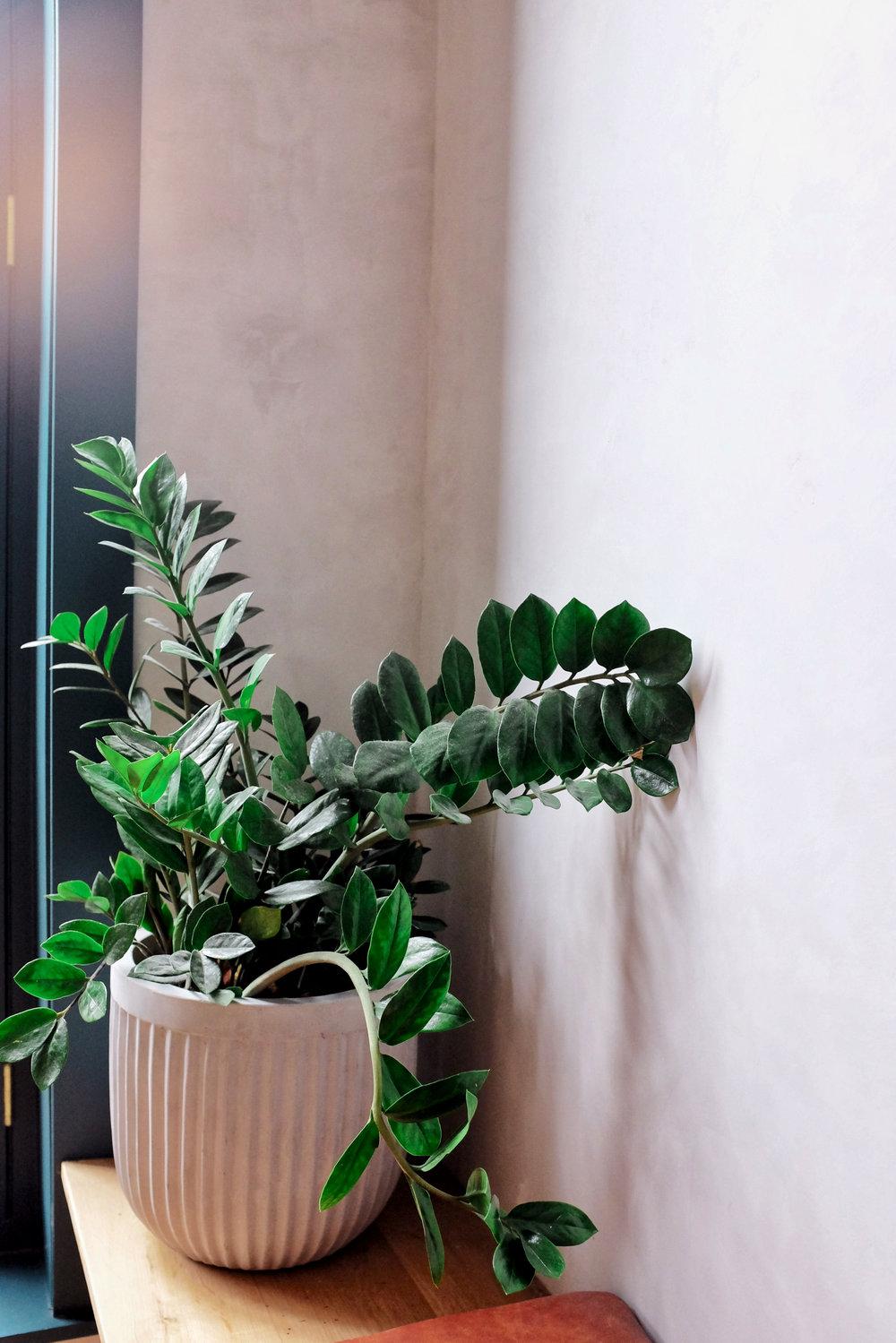 plants lokal hotel