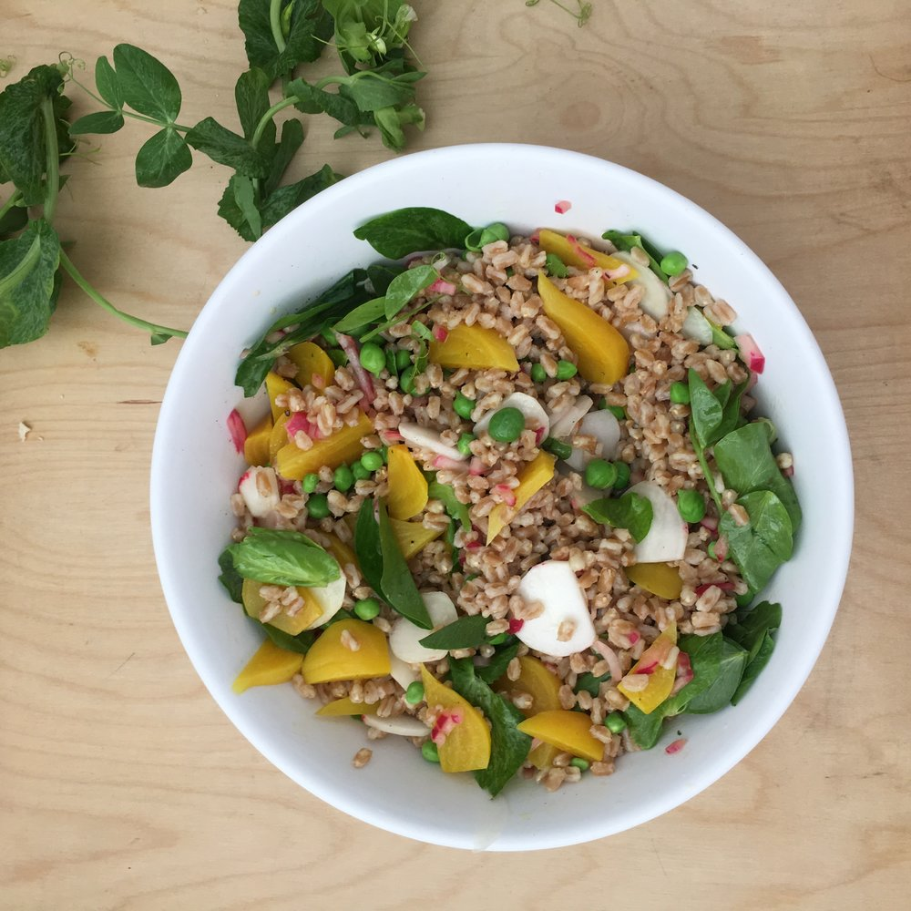 Farro bowl with fresh peas and pea shoots, radishes, and golden baby beets, all tossed with a spirited dressing