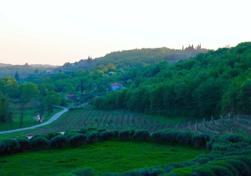 WHERE TO WINE + DINE IN ISTRIA