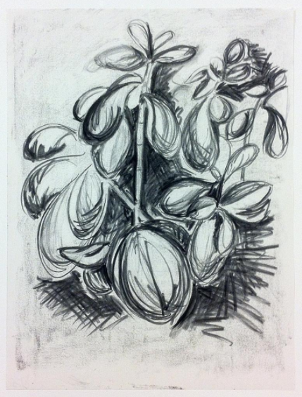Plant Growth Study Charcoal.png