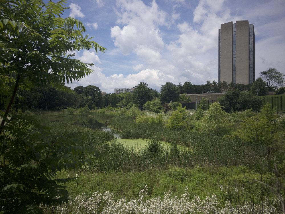 NIH Pond