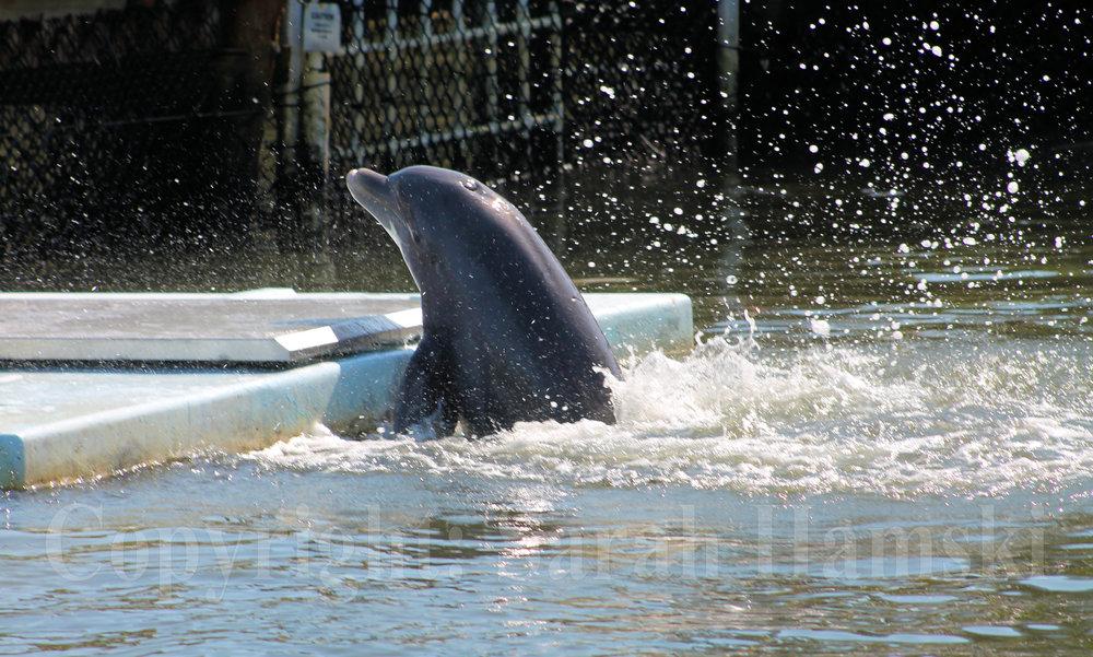 """Dolphin #2"" 2017."