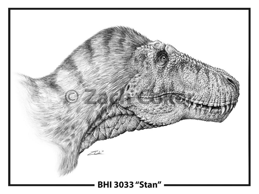 Tyrannosaurus Stan Gallery.jpg