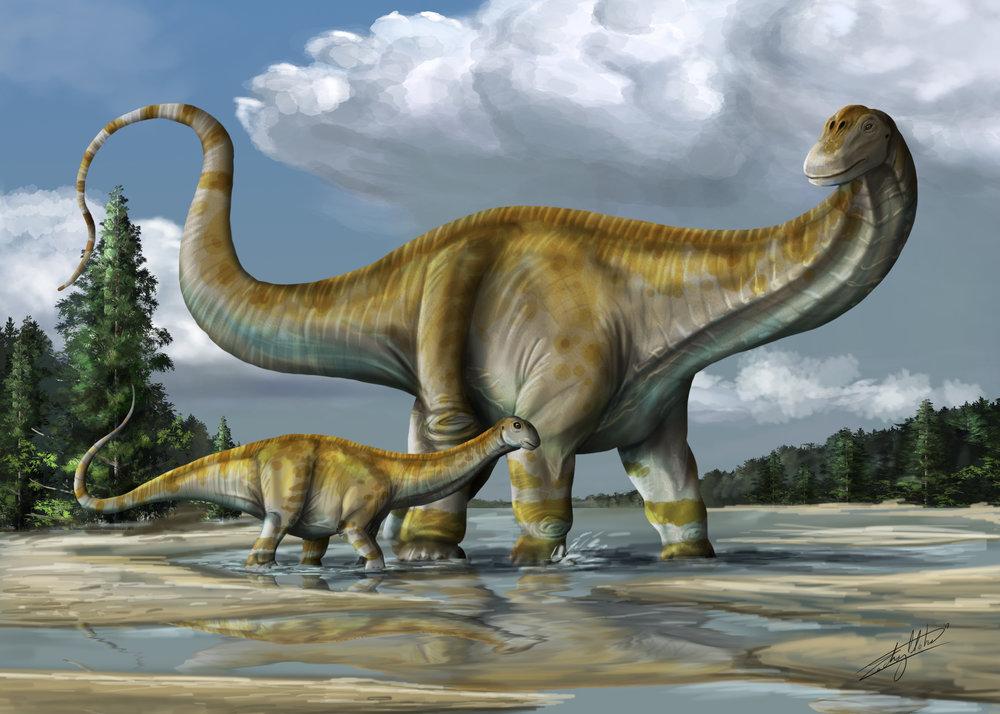 Apatosaurus Final.jpg