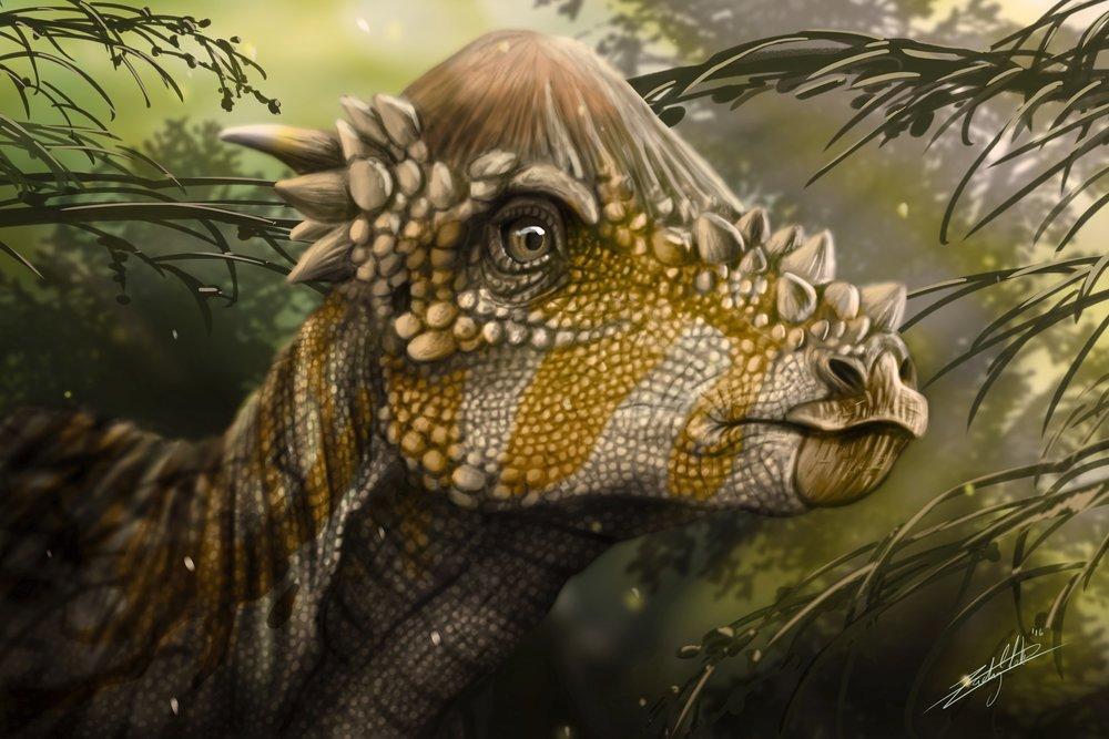Pachycephalosaurus Bust Final Final SM.jpg