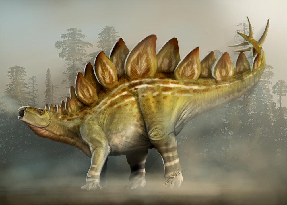 Stegosaurus Final.jpg
