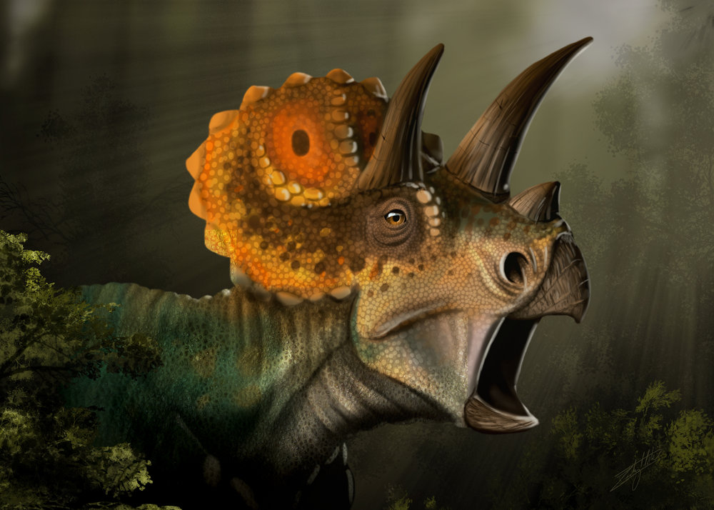 Triceratops FInal.jpg