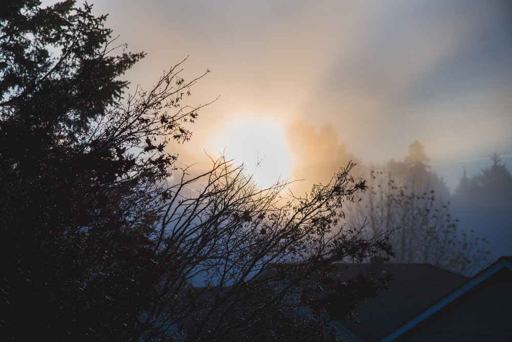 21/365 Out the kitchen window. I noticed the sun was flaring through the fog this morning and I had to show all of you how stunning this was. Hazy, bright, orange and blue. Winter really looks beautiful here in Port Coquitlam