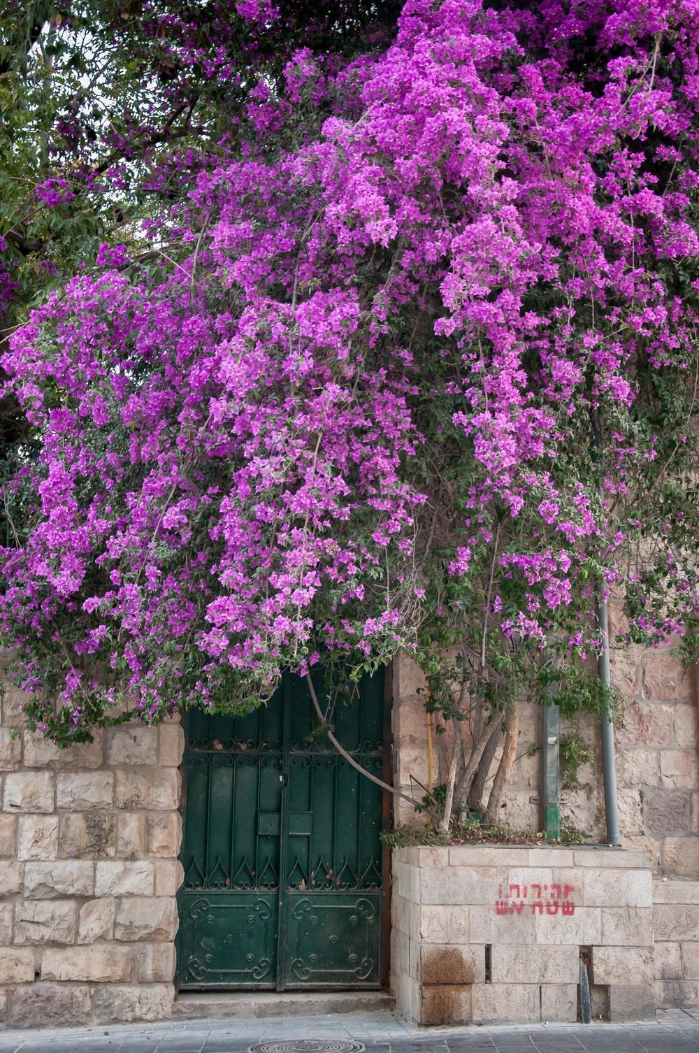 jaffa-st-flower-door-jerusalem-israel_12490903084_o.jpg