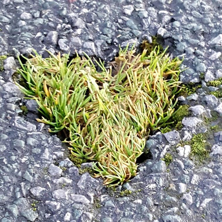 We 'heart' seaweed…
