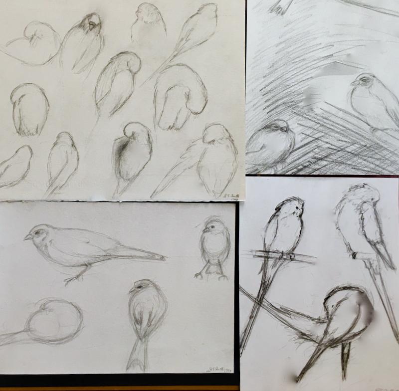 SketchBook/Birds in My Studio    ©1983 LSAuth.