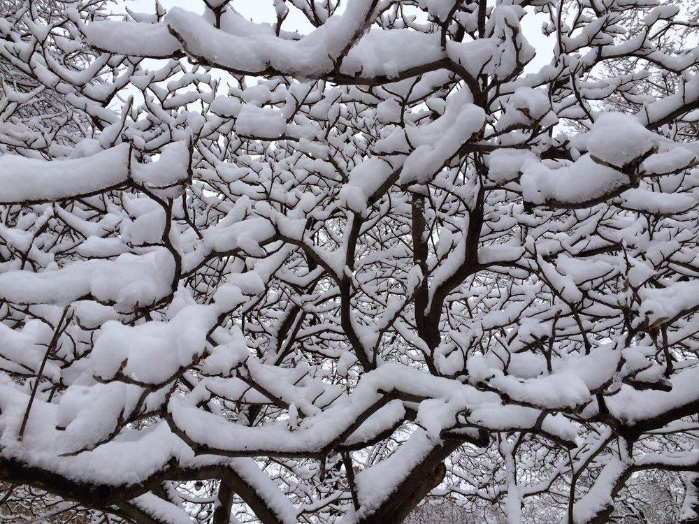 snowt.JPG