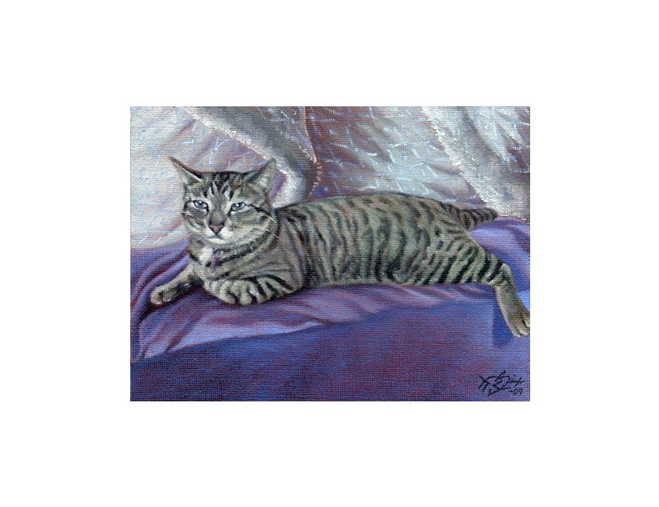 grey cat E2.jpg