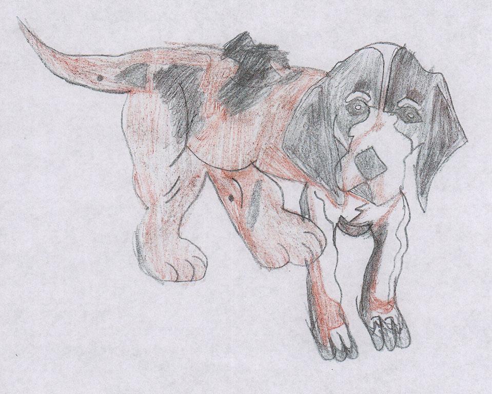 Nick-hound.jpg