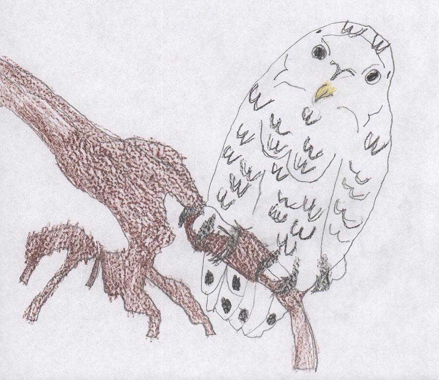 Nick-owl.jpg
