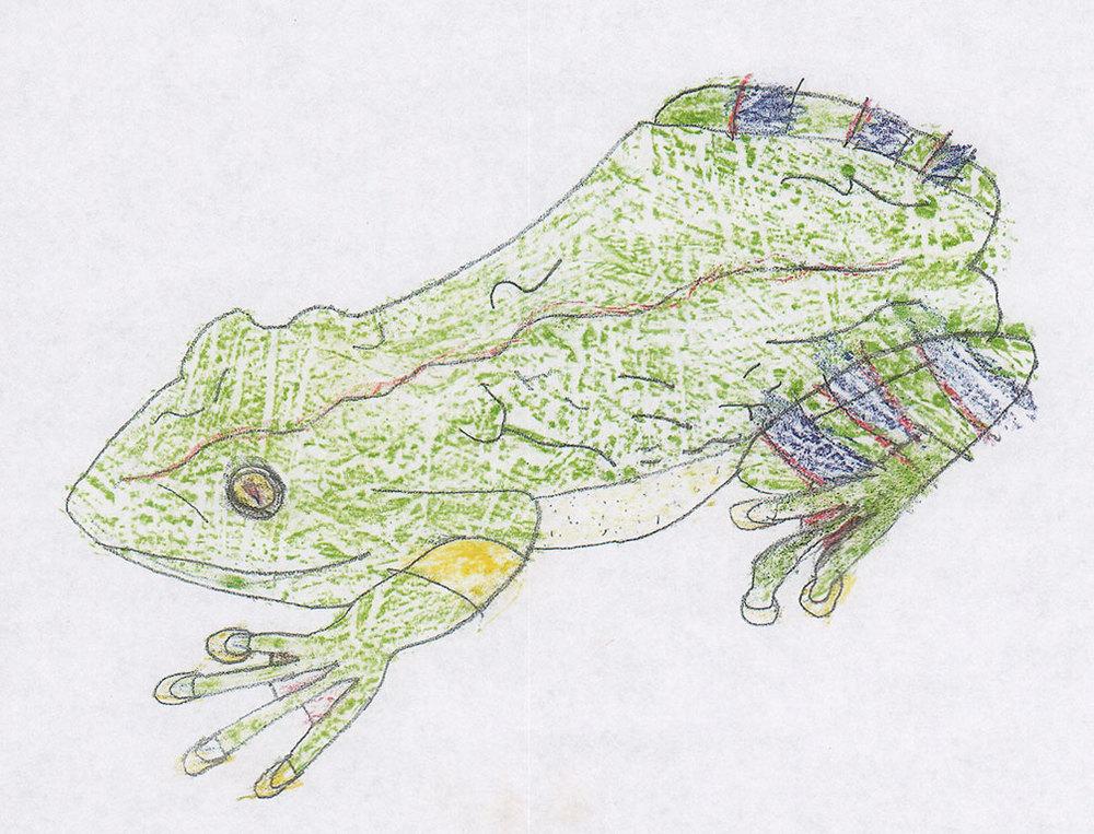 Nick-frog.jpg