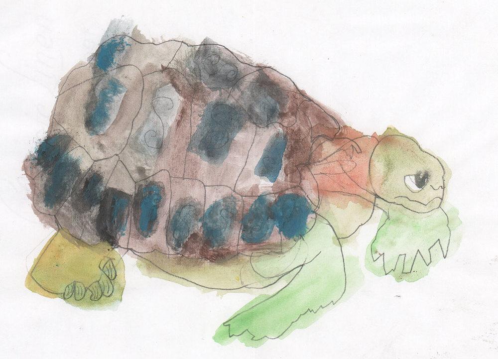 Nick-turtle.jpg